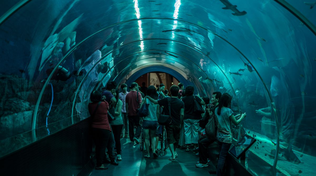 S.E.A Aquarium Singapore